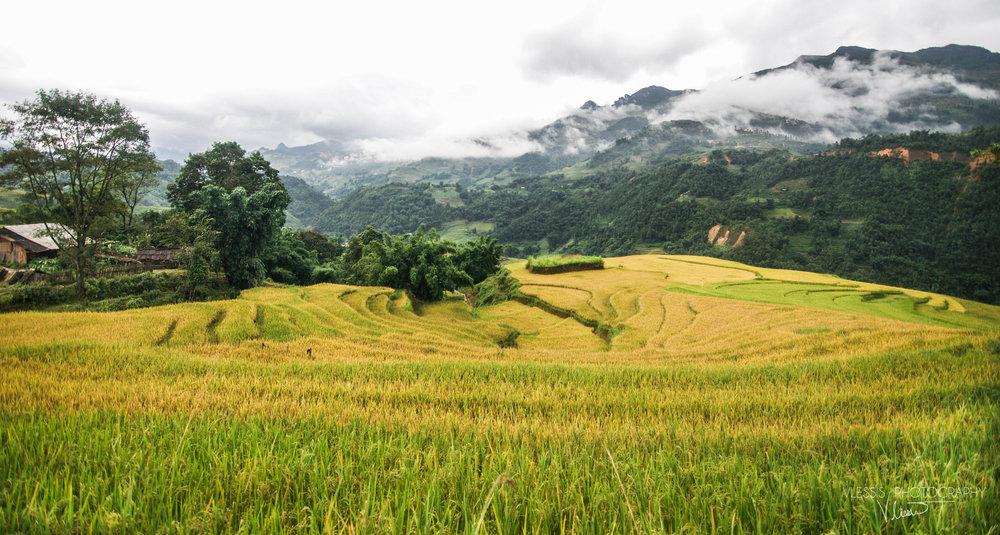 Vietnamsapa (1 of 1)-2.jpg