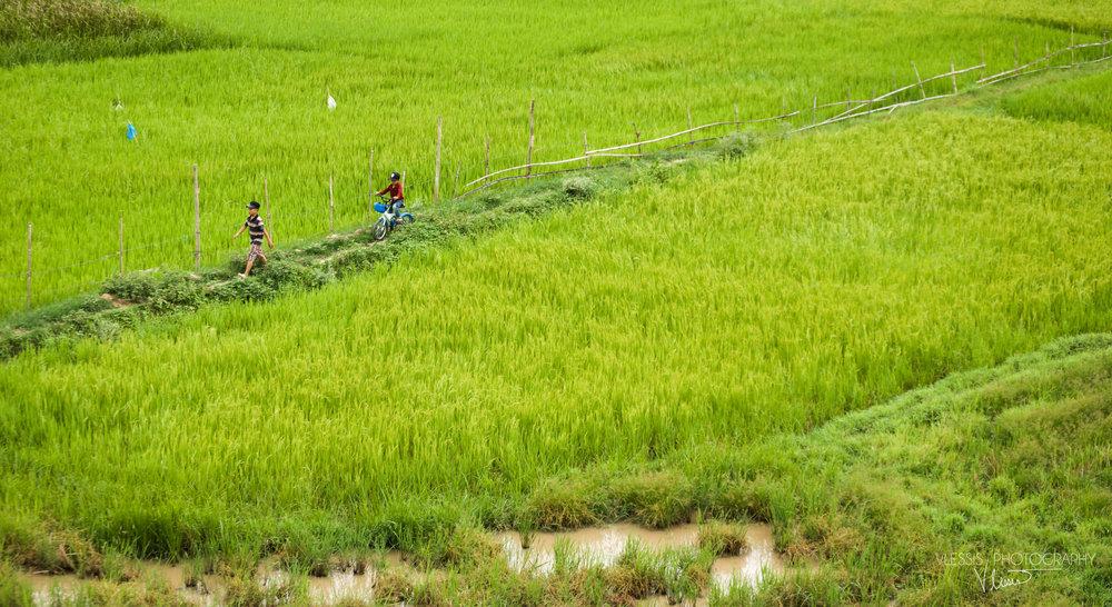 Vietnamrice (1 of 1).jpg