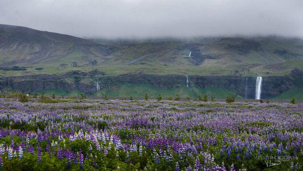 Iceland (1 of 1)-4 copy.jpg