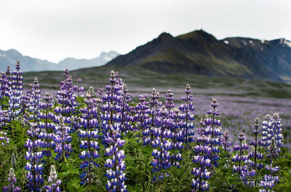 Iceland (1 of 1)-16.jpg