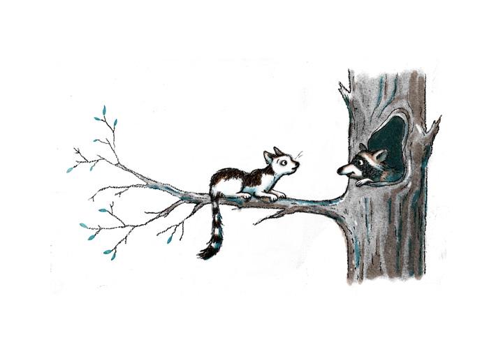 Cat & Racoon 1