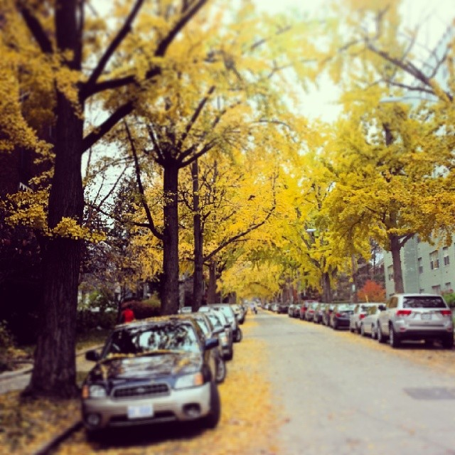 #lookslikeamoviescene #pretty #yellow #fall #seasonal #leaves #washingtondc #quiet #sunday