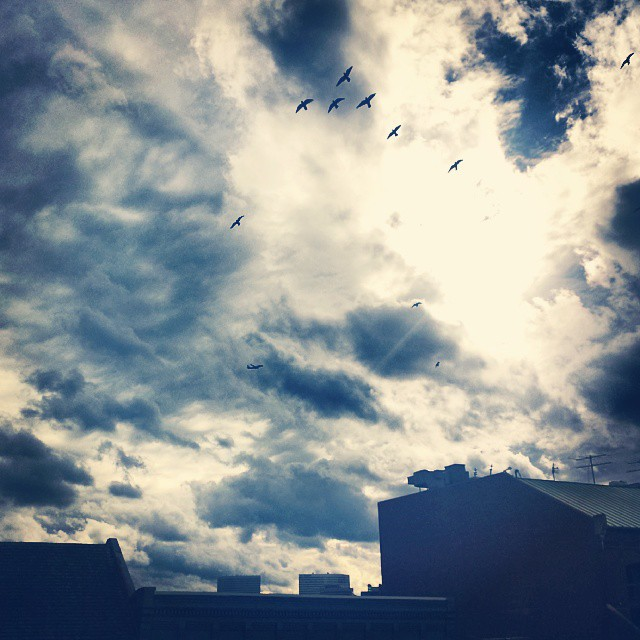 Beautiful day in Georgetown! #georgetown #sunny #cloudy #day #birds #clouds #blues