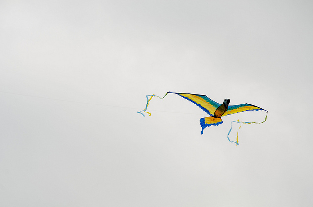 Nayyar Photography's photostream  on Flickr. New Photos posted from Kite Festival last weekend!