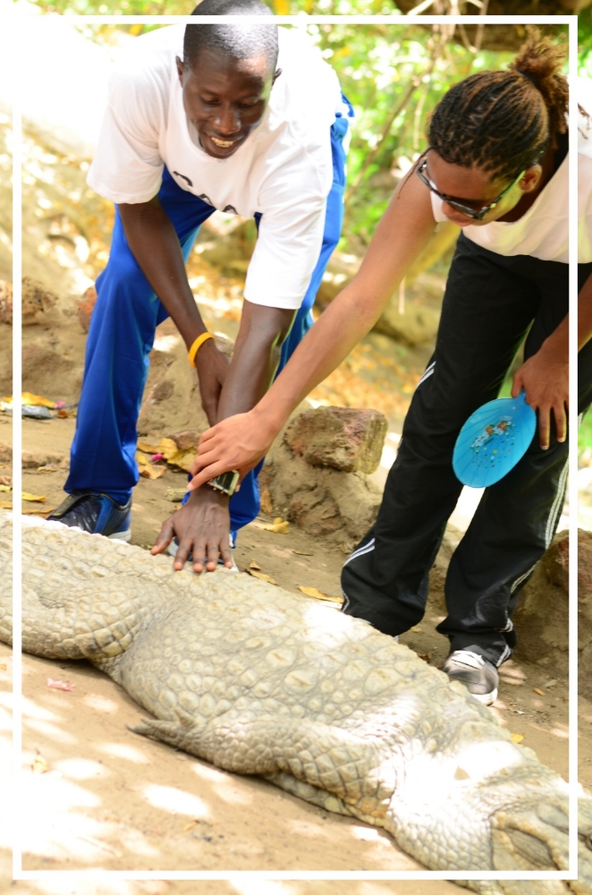 Touching Crocodiles at the Crocodile Pool