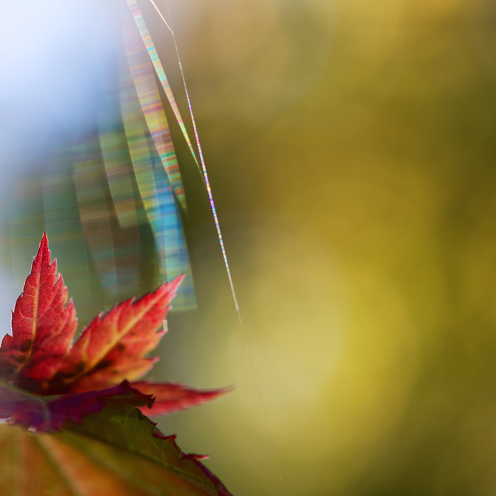 Web and leaf
