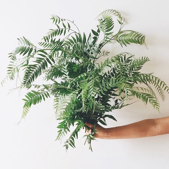 Ferns | A Fabulous Fete