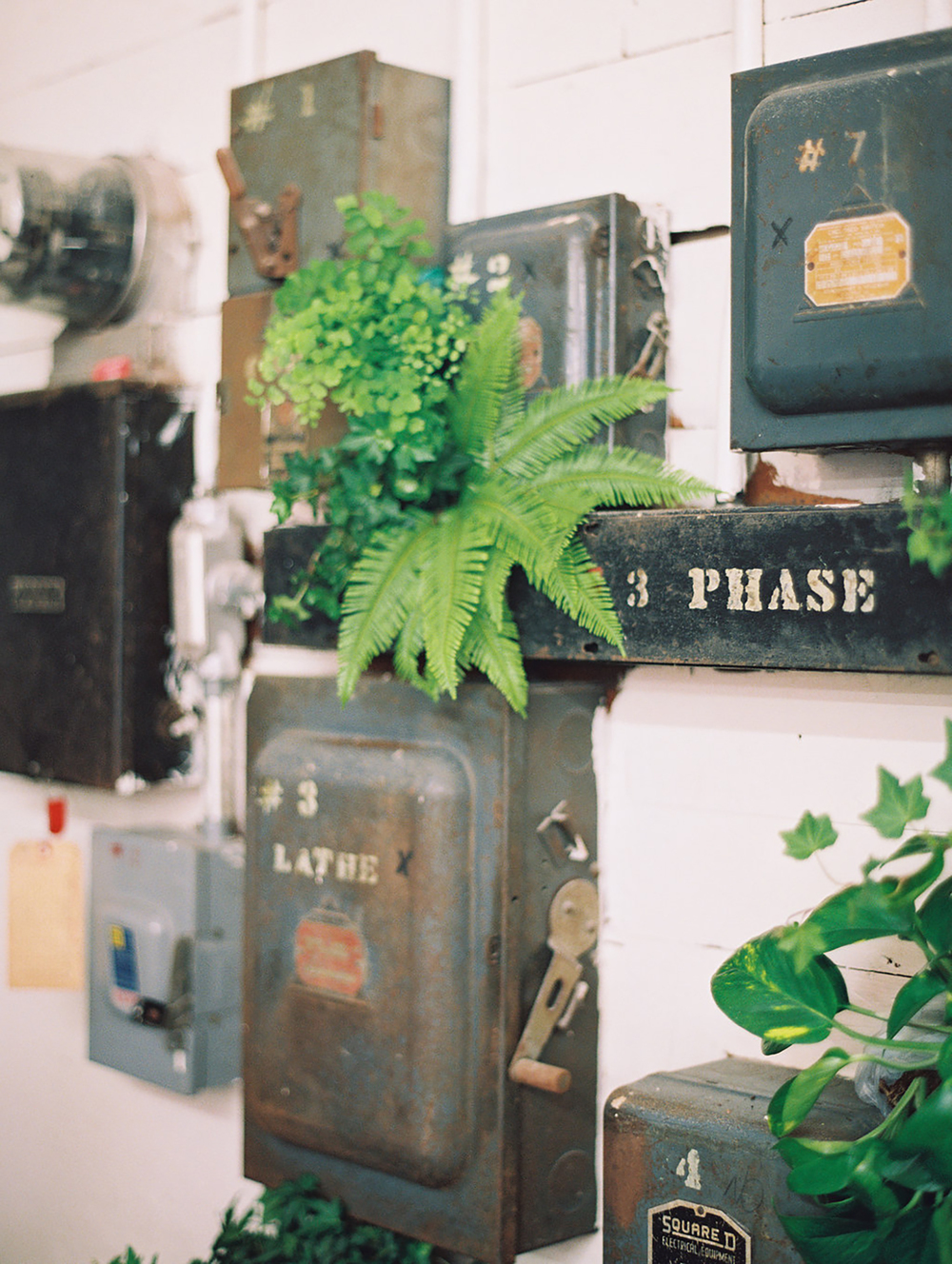 Fern Decor | A Fabulous Fete