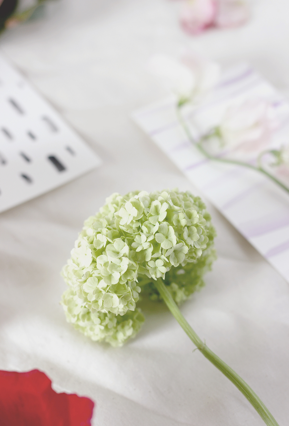 How to pick your flowers in the spring | A Fabulous Fete