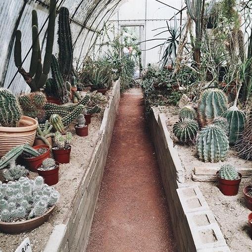 moorten botanical garden.jpg