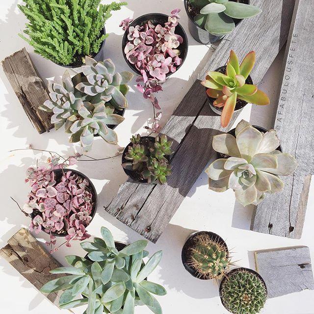 Building a succulent garden | A Fabulous Fete