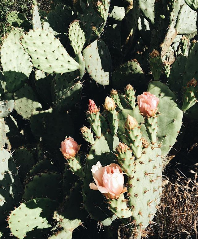 Cactus in bloom, Whiting Ranch | A Fabulous Fete