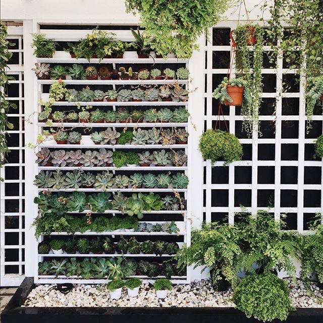 succulent-wall.jpg
