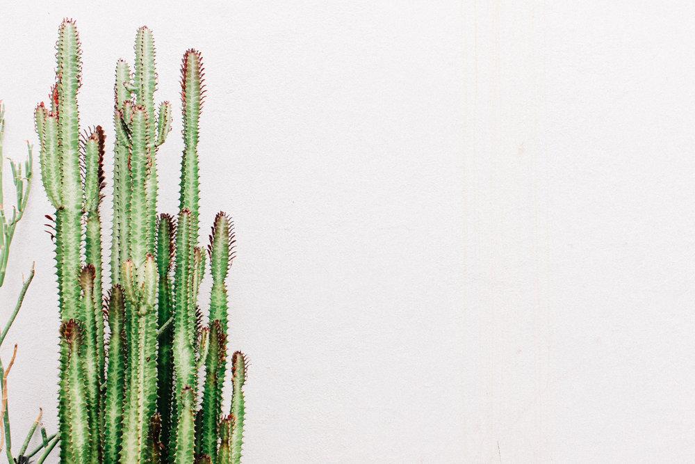 Cacti | A Fabulous Fete