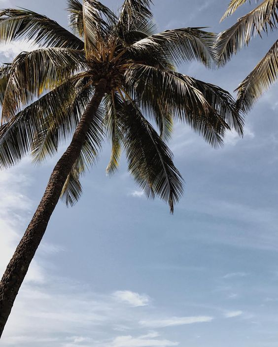 Palm-Trees-Maui-Hawaii.jpg