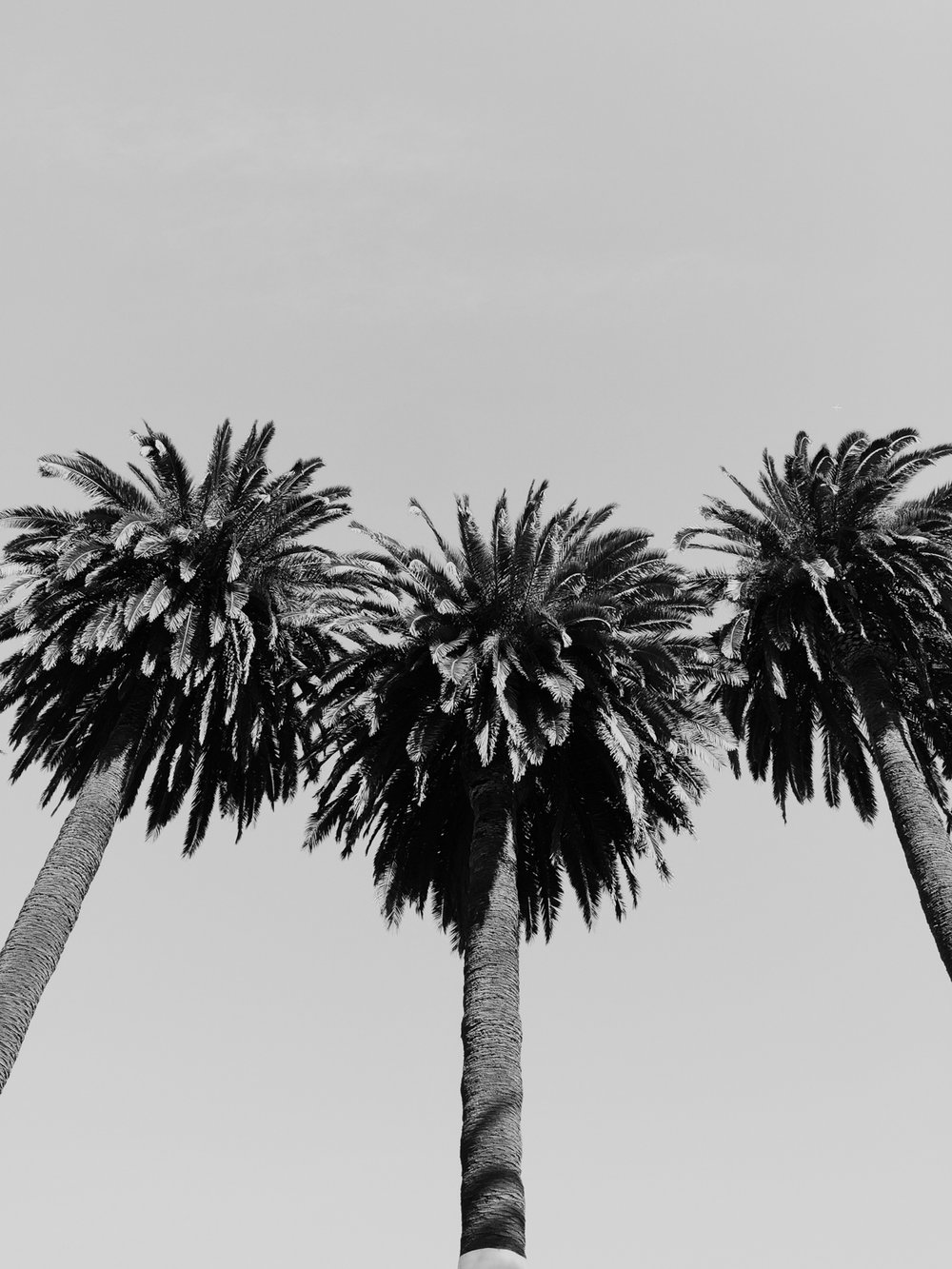 California palms | A Fabulous Fete