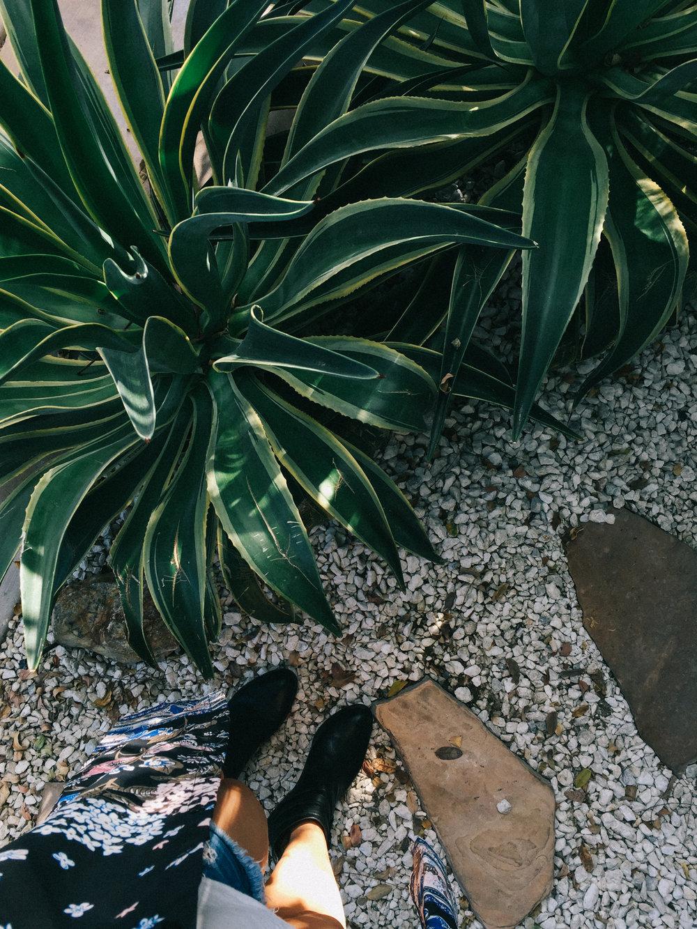 Oversized succulents | A Fabulous Fete