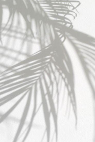 palm tree shadows