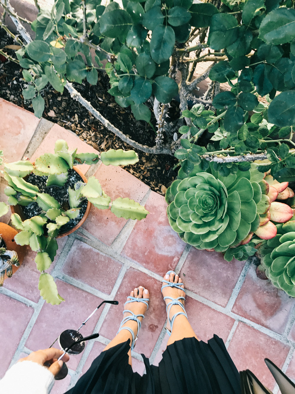Succulent heaven at this amazing location in San Clemente! | A Fabulous Fete