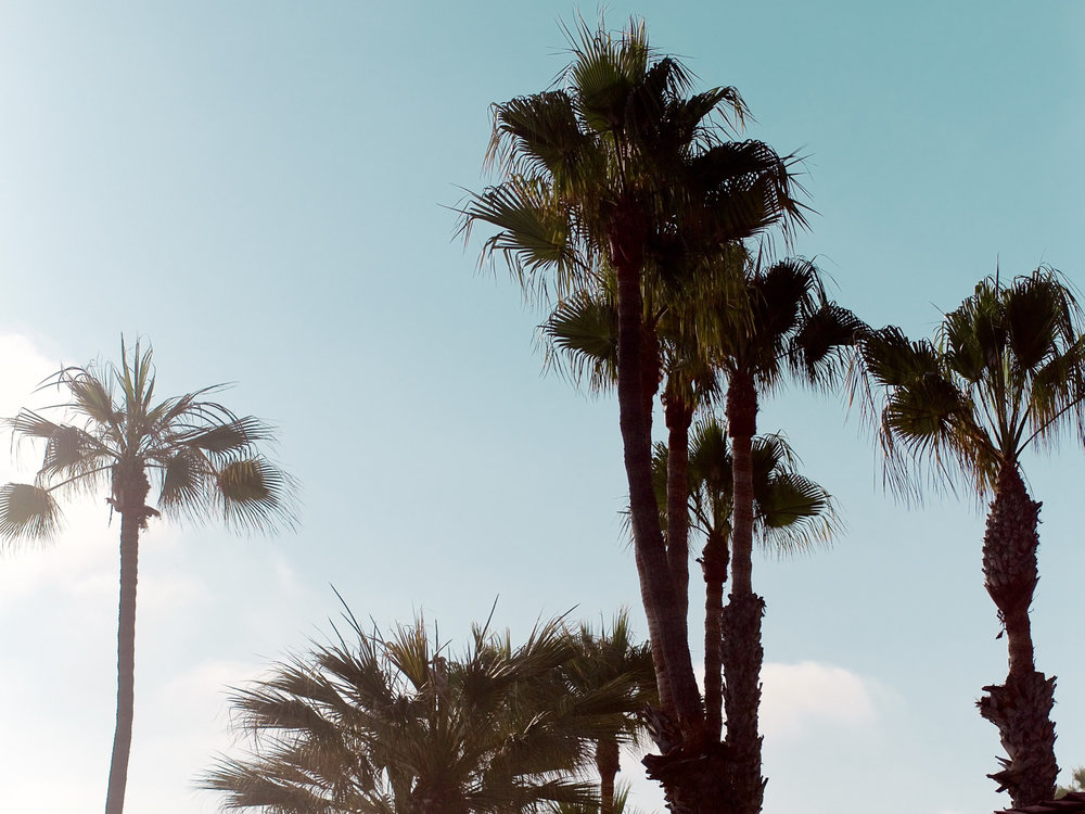 Palm Trees, Laguna Beach | A Fabulous Fete