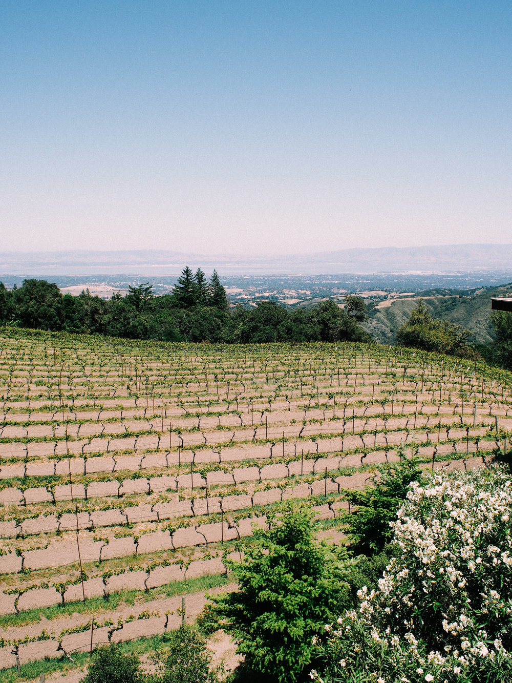 Winery in Half Moon Bay | A Fabulous Fete