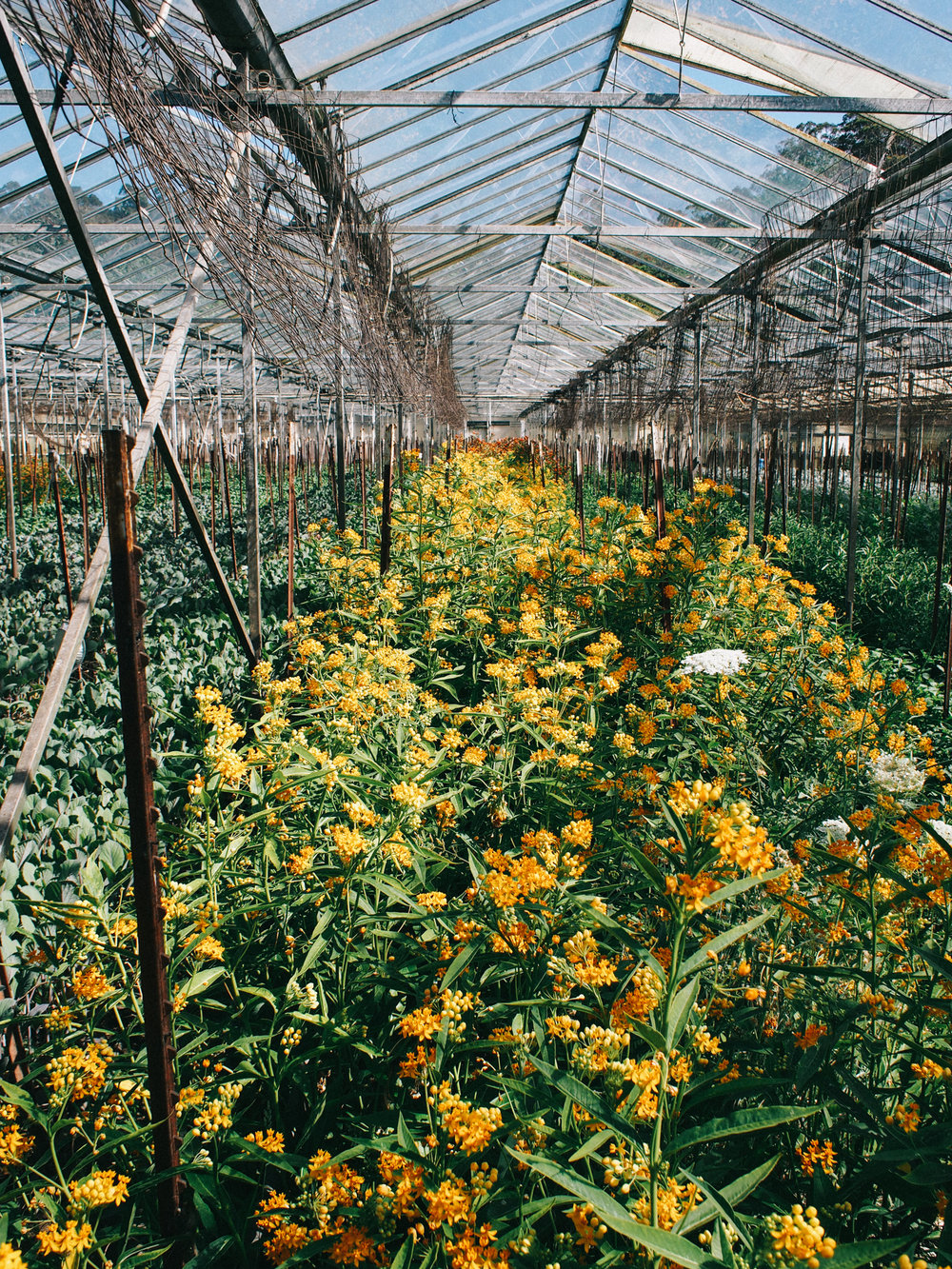 where the flowers grow, check out our visit to this flower farm on the blog | A Fabulous Fete