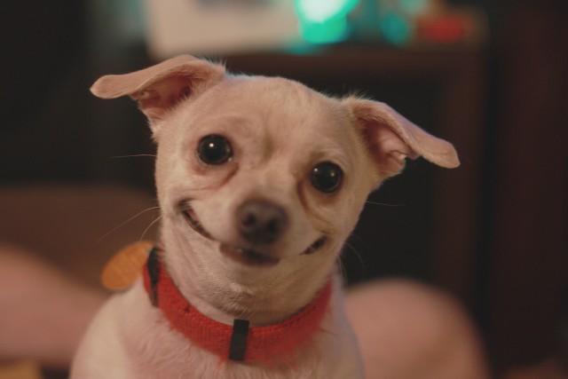 cute smiling dog.jpg