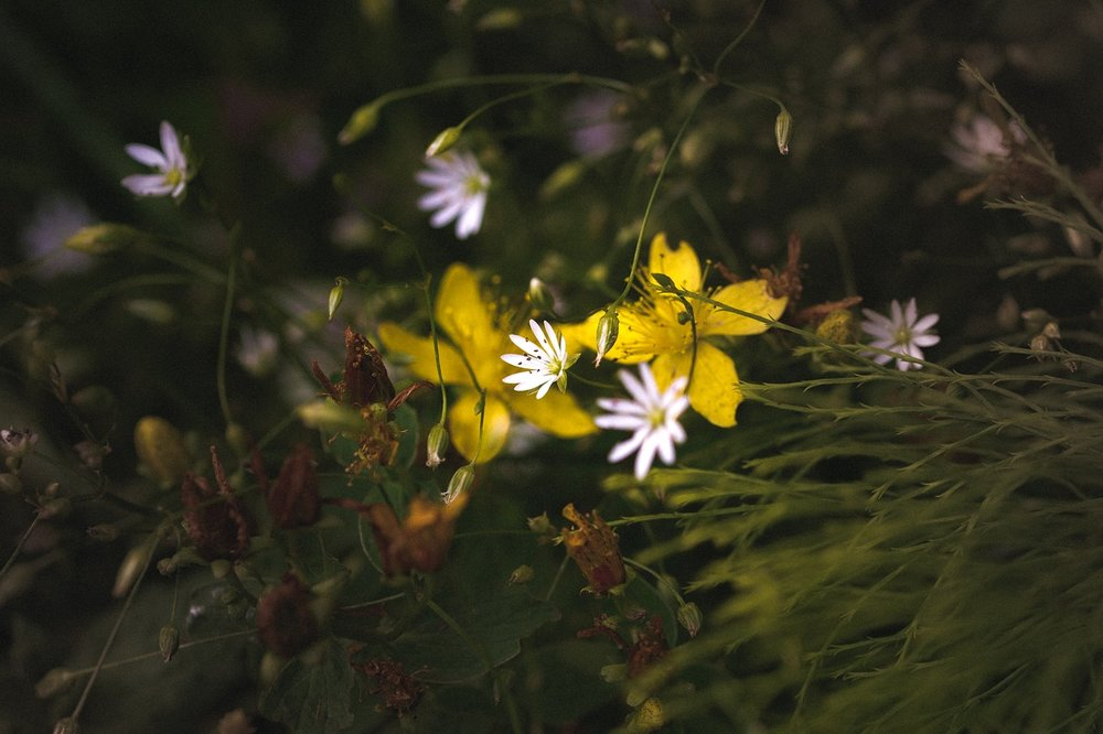 flower-2830323_1280.jpg