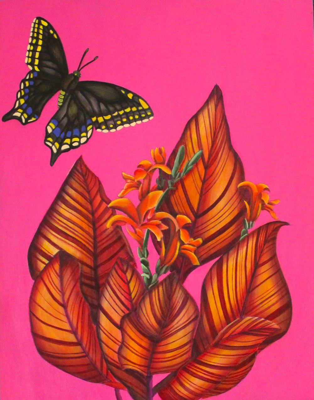 Canna Swallowtail.jpg