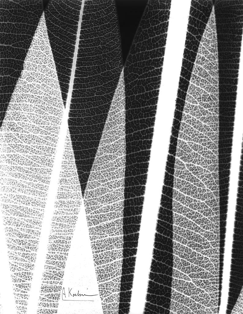 Oleander Leaves X10