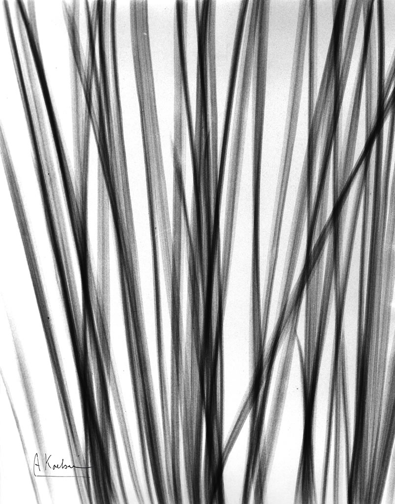 Untitled (Grasses) X27