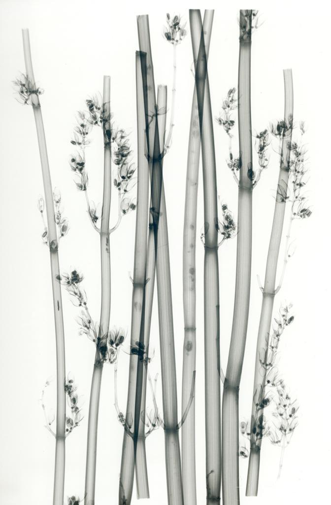Desert Flowers E193