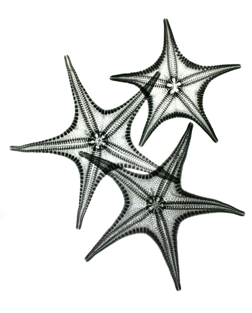 Starfish L300