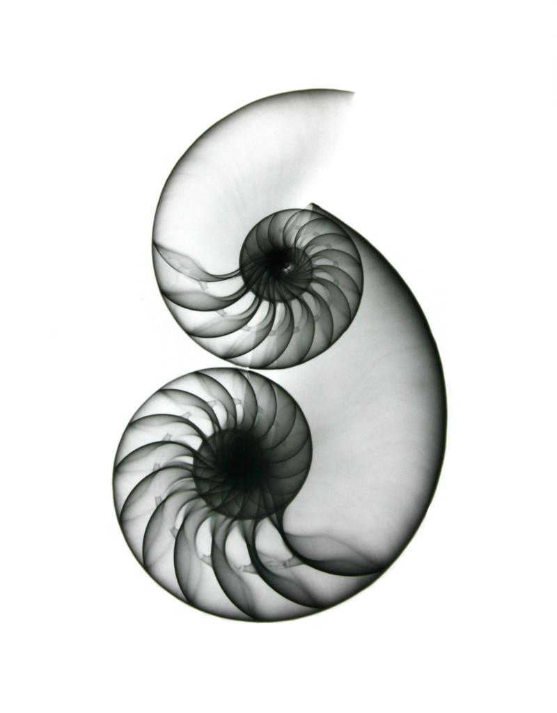 Nautilus F128