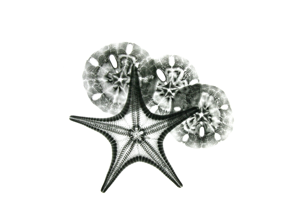Starfish and Sand Dollars F150
