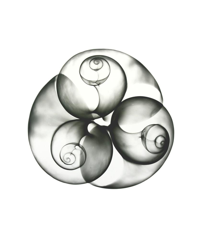 Sea Snails F131