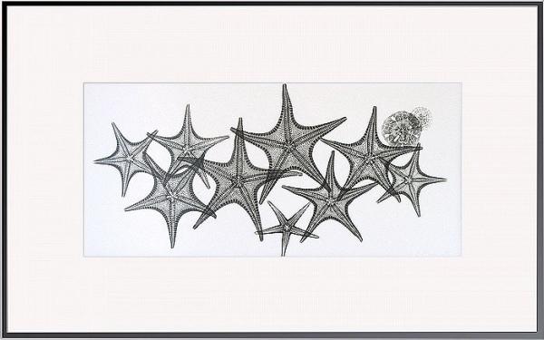 Starfish L144