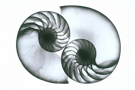 Nautilus L34