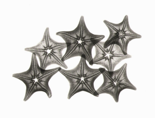 Starfish F109