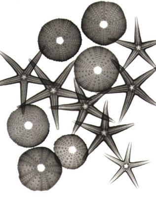 Starfish F82