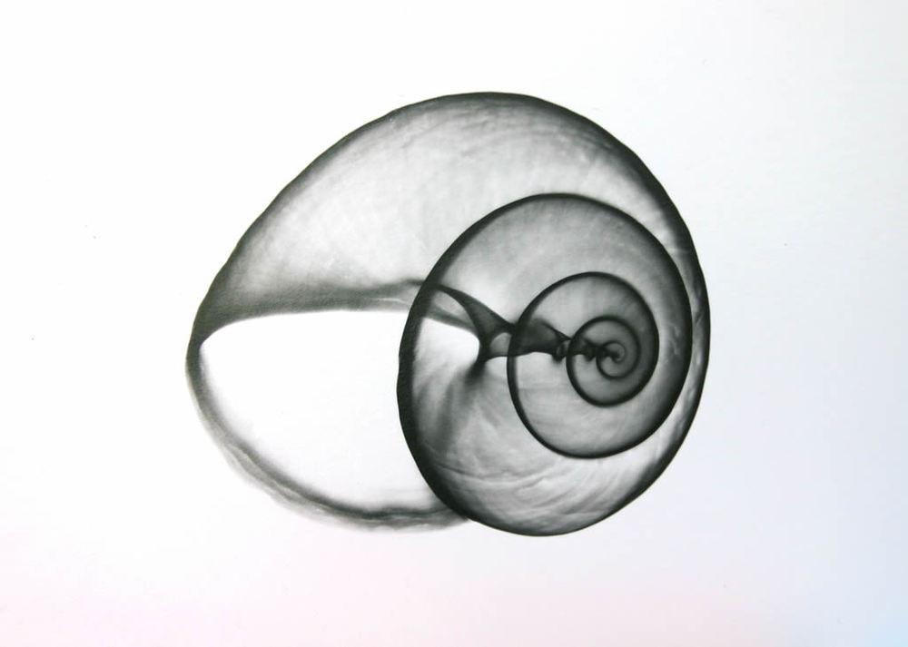 Sea Snail F70