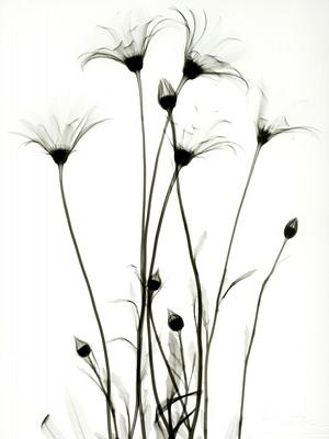 Wildflowers C45