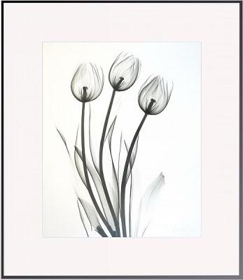 Tulips L221