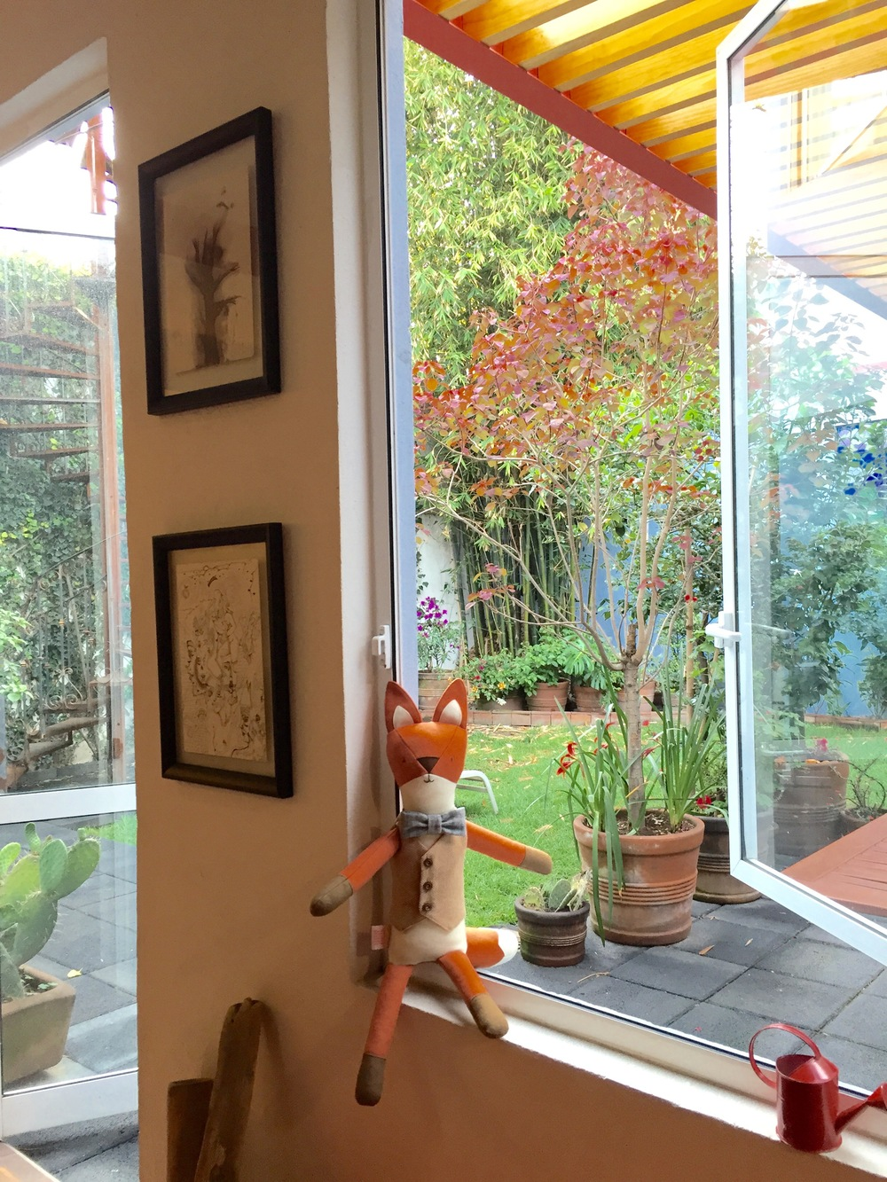 Henry the Fox enjoying fresh morning air