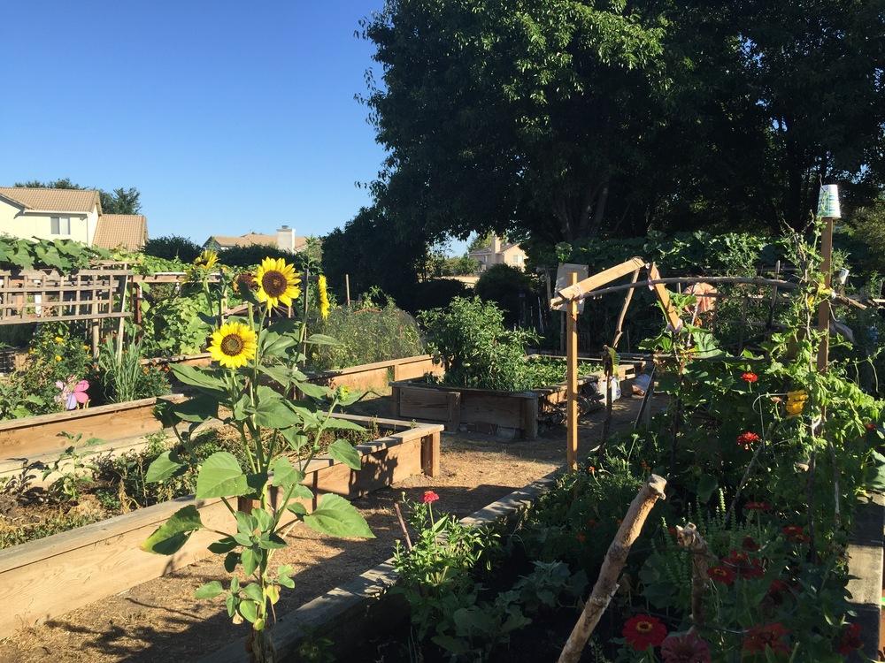 multiple gardens
