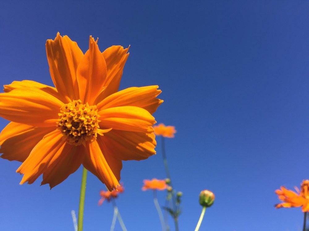 Ntran_Floral_BlueAndYellow