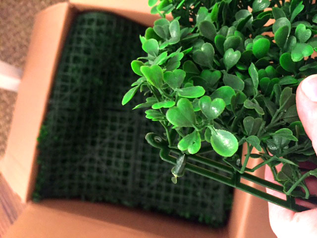 House Plus Love Boxwood Tabs