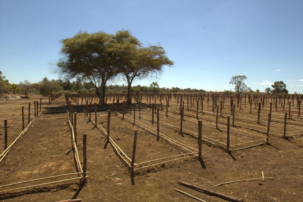 Planting Site