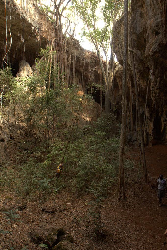 Tree root swing