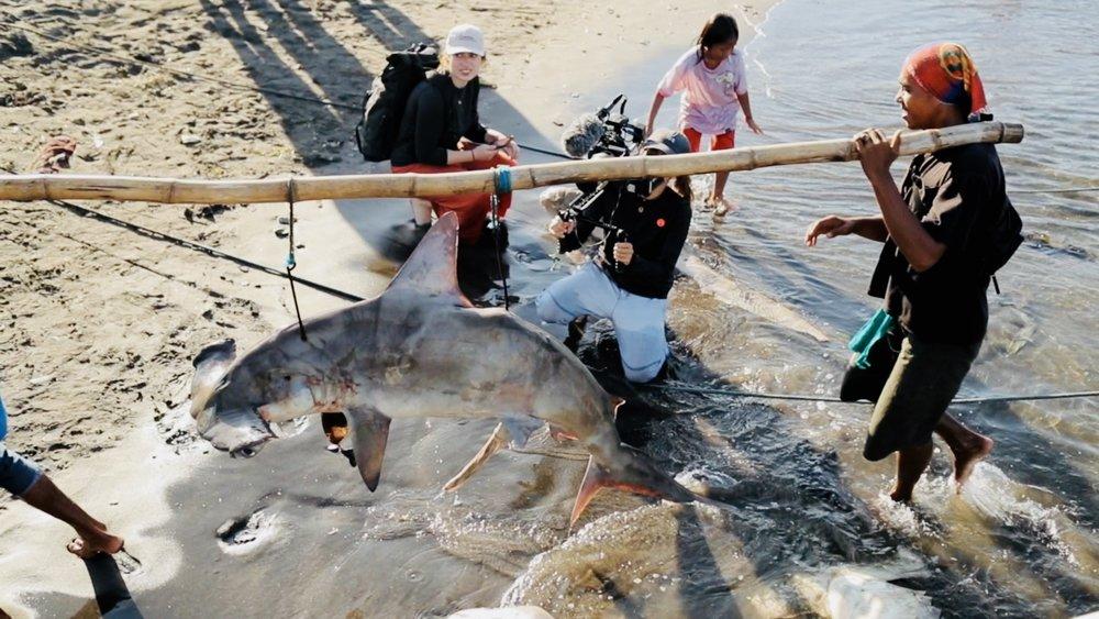 Sharks Lombok.jpeg